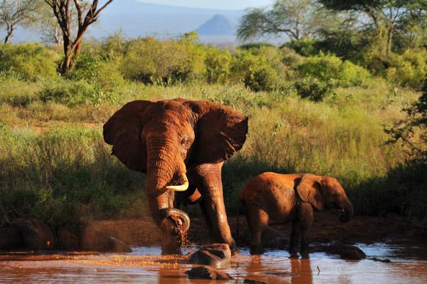 Africa 2010 (118)