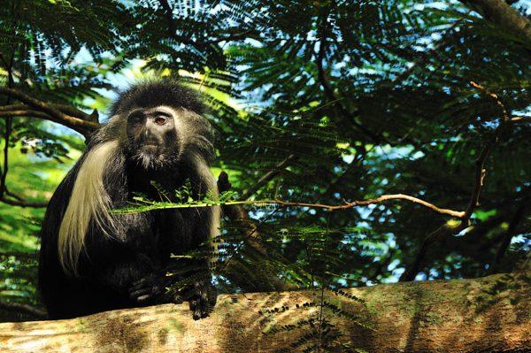 Africa 2010 (141)