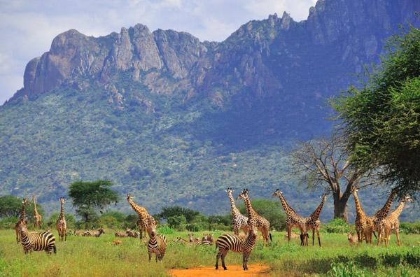 Africa 2010 (69)